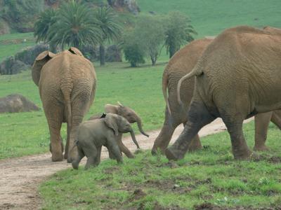 parque-cabarceno-cantabria-elefantes